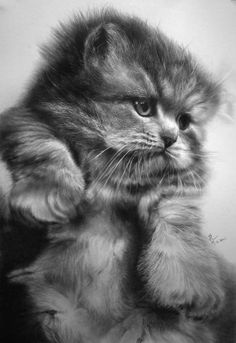 Increíbles Dibujos de Gatos Hechos a Lápiz por Paul Lung
