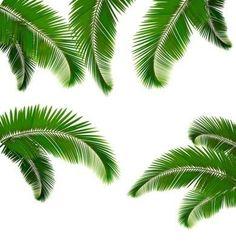 Naklejka na Ścianę Zestaw liści palmowych na białym tle ilustracji wektorowych