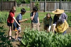 Students smell fragrant herbs in the kitchen garden at Pennsbury Manor.