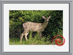 Deer in the Field Counted Cross Stitch Pattern - Deer Cross Stitch Chart - Instant Download PDF, Relaxing Hobby