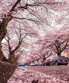 Everything looks better covered in pink