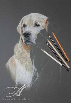 1,000,000 Pictures Golden Retriever Portrait, Drawn with colored pencils on colored paper by Atelier Arends