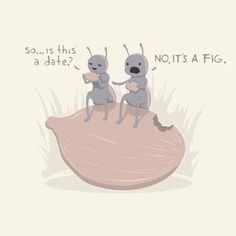 So... is this a date? No, it's a fig.
