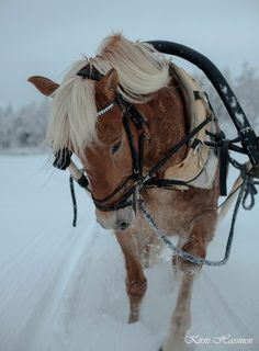 Farm Animals, Animals And Pets, Cute Animals, Beautiful Horses, Animals Beautiful, Farm Day, Draft Horses, Winter Scenes, Horseback Riding