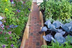 Pretty Vegetable garden with herbs and flowers, in raised beds with brick walk pathway leading to house. Cabbages, carrots, beans, chives, cutting flowers, etc intermixed and planted together, growing in beautiful tidy garden