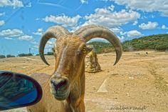 Mi Mundo en Fotografias: Miercoles Mudo: Animales