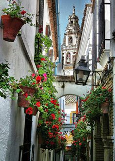 Cordoba, in Andalucia.  Narrow cobbled streets are enclosed by white walls and red flowers with a magnificent Moorish mosque as its centerpiece.