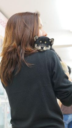 Black & Tan Shiba Puppy. Oh my goodness the cuteness is out of control.