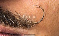 """""""Mustache macro shot."""" Fotos de archivo e imágenes libres de derechos en Fotolia.com - Imagen 68478444"""
