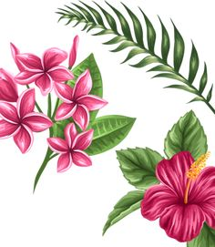 Plumeria Tattoo, Hibiscus Flower Tattoos, Flower Tattoo Back, Hibiscus Flowers, Tropical Flowers, Jungle Images, Flor Tattoo, Graffiti, Hawaiian Party Decorations