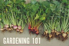 Put Your Green Thumb To Work With These Organic Gardening Tips * Find out more details by clicking the image : Gardening ideas #organicgardening