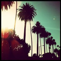 beverly hills - I love palm trees!!! :)