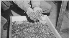 Holocaust Photos: 44 Heartrending Images Of Tragedy And Perseverance How To Dry Basil, Gifs, Forget, Sad, Photos, Pictures, Presents