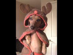 Zero the reindeer