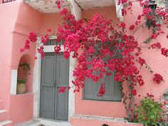 grey door on pink house adorable pink house Mod Vintage Life: Little Pink Houses Fachada Colonial, Myrtle Tree, Grey Doors, Pink Houses, Bougainvillea, Everything Pink, Windows And Doors, Front Doors, My Favorite Color