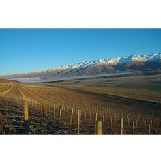 Central Otago • NZ Wine
