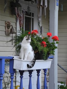 Flower Box Cat