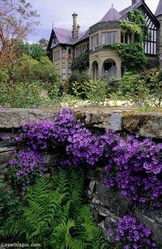 Purple Flowers Cascade Retaining Wall home flowers purple house garden wall yard landscape architecture trail cascade retaining