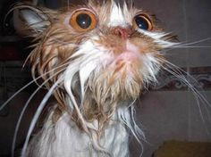 15 Reasons Why Wet Cats Are Hilarious 8 - https://www.facebook.com/different.solutions.page