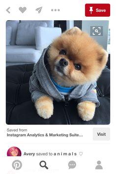 Como se llama avery de stan el perro bloguero yahoo dating