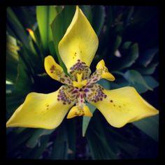Triangel yellow fellow flower...