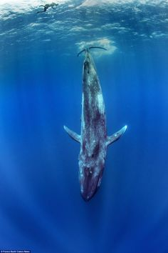 Photographer captures breathtaking images as he swims with blue whale