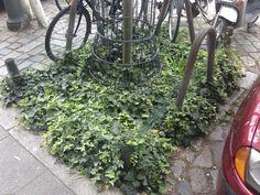 Mit Fahrradschutzzaun Urban Gardening, Guerrilla, City, Plants, Fence, Trial Bike, Flora, Apartment Gardening, City Drawing