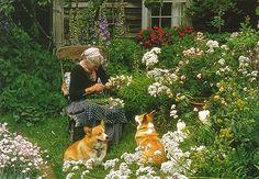 Tasha Tudor corgis flower garden