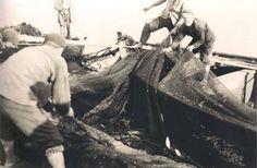 Tirando de una red en Ezaro (1920-1930)