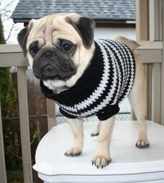 This sweet little baby looks just like my Jasper and I love the sweater
