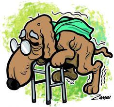 A idade chega  para os cães e  alguns cuidados podem garantir que velhice  do seu cão  idoso seja  saudável e feliz até o fim.