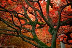 Mouse pad red colors of autumn surreal photo by behindmyblueeyes, $22.00