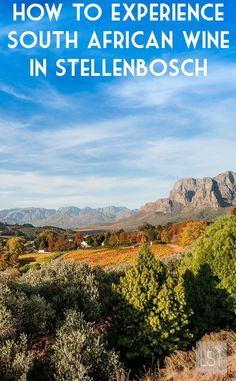 South African wine is a true experience when you travel to the Stellenbosch wineries in the country's Western Cape. From blending to chocolate pairings, vertical tastings there's plenty to enjoy. So take time out a trip to Cape Town to really make the most of it.