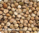Hemp seed oil: The new healthy oil