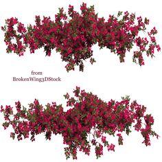 Bougainvillea 02 by BrokenWing3dStock.deviantart.com on @deviantART