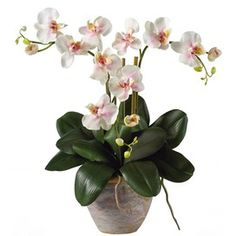 Triple Phalaenopsis Orchid Arrangement in Light Pink