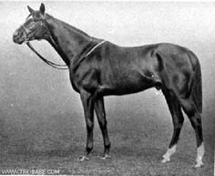 Stedfast(1908)(Chaucer- Be Sure By Surefoot. 3x4 To Galopin, 4x4 To Hermit, 5x5 To Macaroni, 5x5x5 To Stockwell. 29 Starts 21 Wins 5 Seconds 3 Thirds. $154,000 Est. Won Champion S, Coronation Cup.
