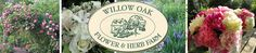 This is a wonderful and magical place.   Willow Oak Flower & Herb Farm, Severn, MD.