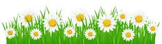 Grass Ground with White Flowers PNG Clip Art Image