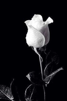 Orchidaaorchid