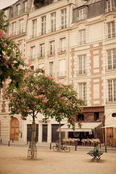 Springtime in Paris...Chestnut trees in bloom