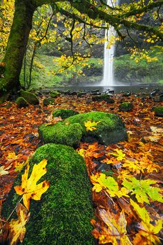 South Falls in Autumn, Silver Falls State Park - Oregon | by Alan Howe on 500px