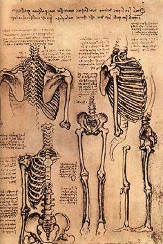 Creative Sketchbook: Leonardo da Vinci's Anatomical Art!