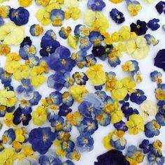 StillRoom Adventures: flowers