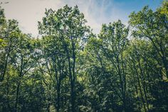 #biotope #branches #bright #countryside #dawn #daylight #environment #fir #forest #green #growth #habitat #idyllic #landscape #leaves #nature #outdoors #park #rural #scenic #season #tree trunks #trees #view #wood #wooden #