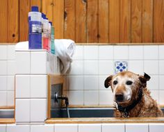 The Pet Works in downtown Astoria offers a Self Service Dog Wash for $15 for a single dog (the cost drops to $12.50 per dog if you travel with a pack). They provide the shampoo and conditioner, and you provide the mangy mutt and the elbow grease.