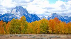 Trees Autumn Mountains