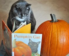 Cheryl Burnette-Greyson reading Pumpkin Cat by Anne Mortimer by HomewoodPix on… Crazy Cat Lady, Crazy Cats, I Love Cats, Cool Cats, Funny Animals, Cute Animals, Funny Cats, Cat Pumpkin, Cat Boarding