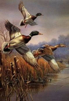 Realistic Oil Painting Of Birds Wildlife Paintings, Wildlife Art, Paintings Of Birds, Realistic Oil Painting, Painting & Drawing, Art Canard, Graffiti Kunst, Duck Art, Hunting Art