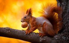 Hungry squirrel!  Lo scoiattolo affamato